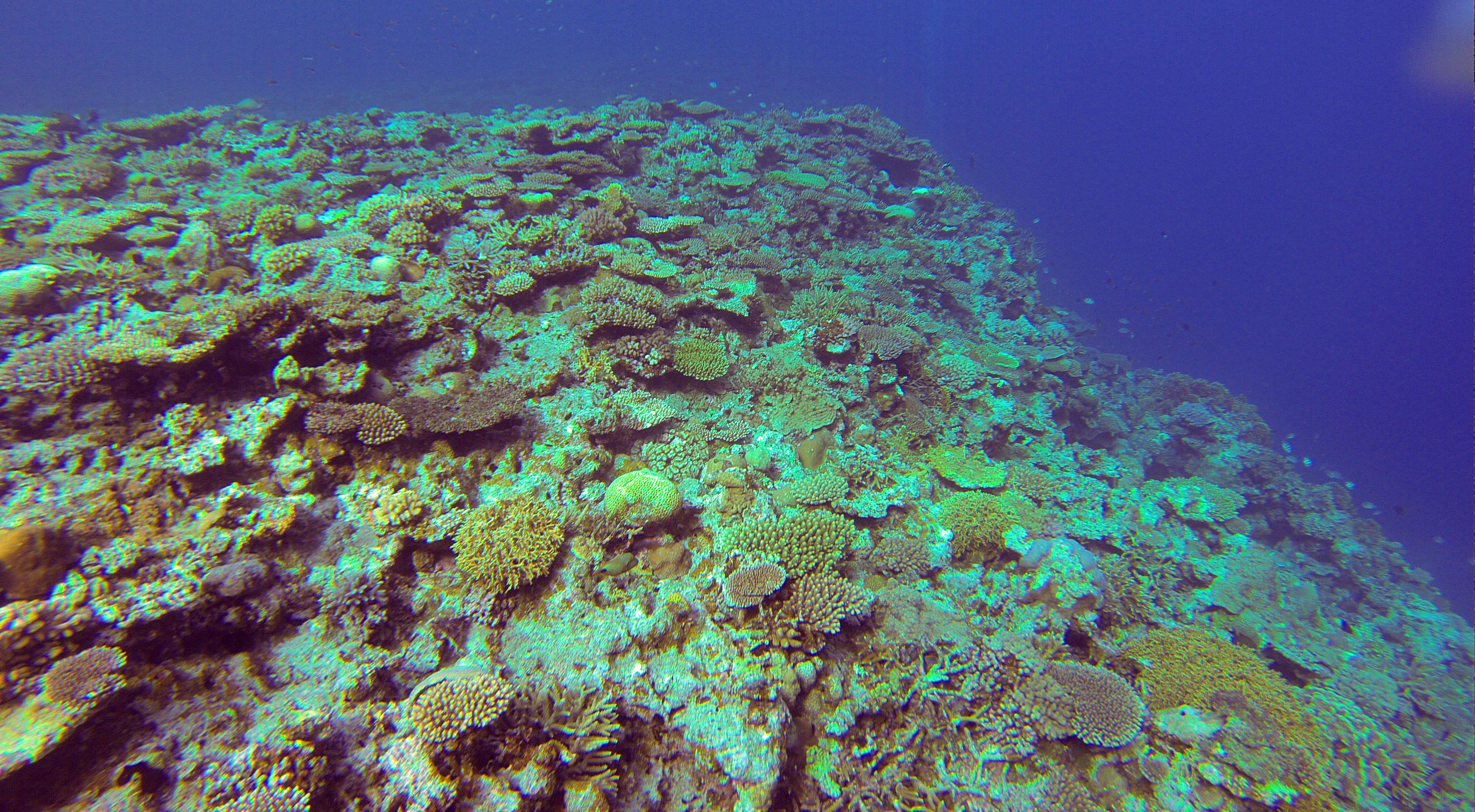 1. Marine biogeochemistry
