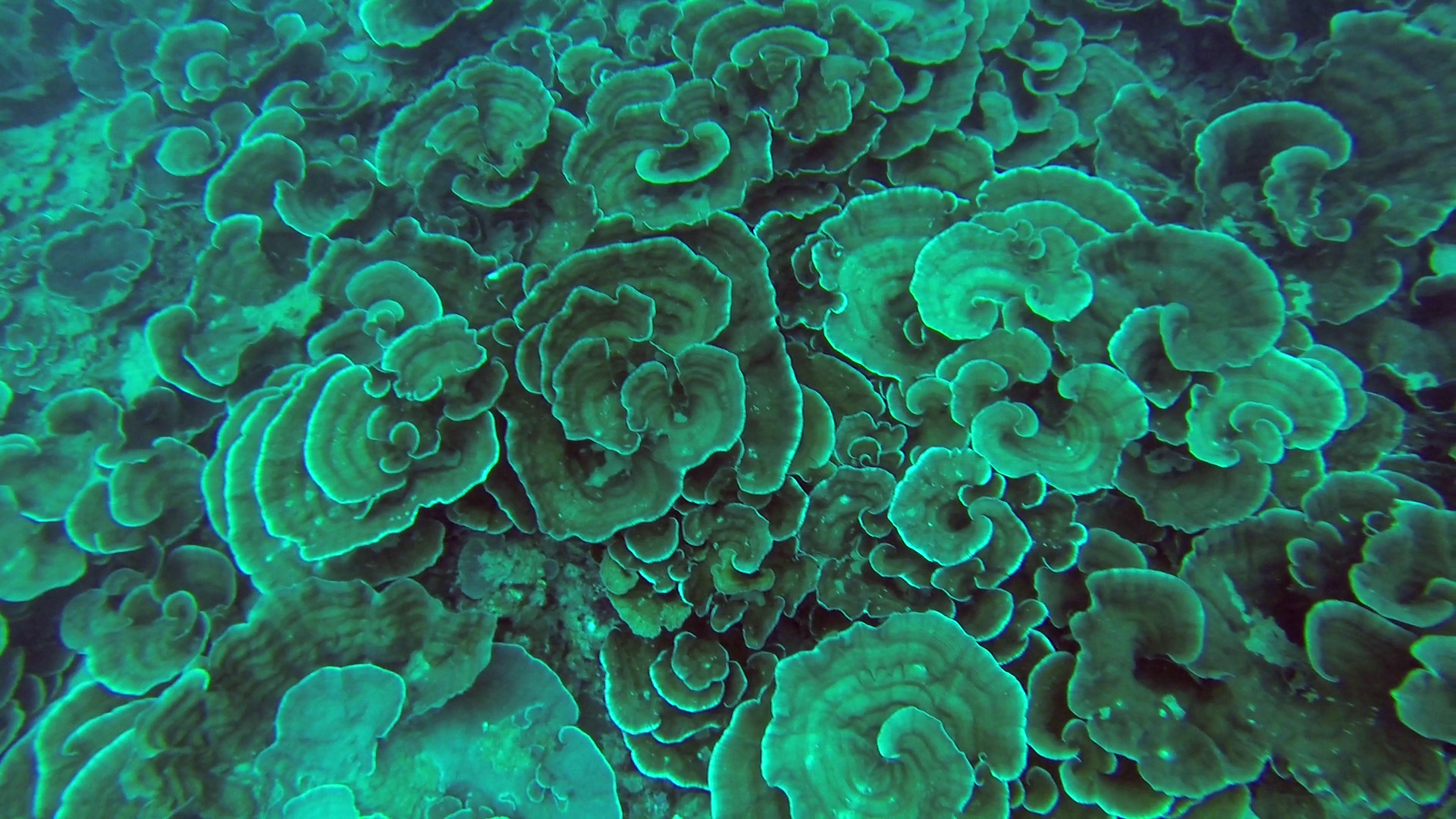 2. Coral Reef Ecology